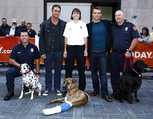K9s Ready to Go For Chicago Fire