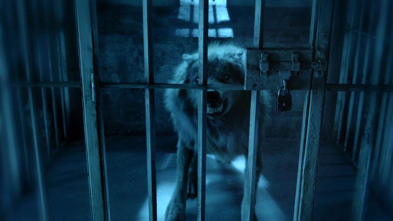 syfy's Biten wolf in cage